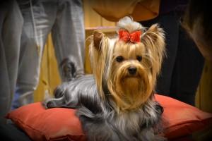 Dog show Knarvik 058
